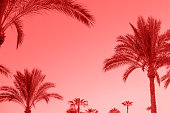 Living Coral color of the Year 2019 toned Tropical palm trees, sky as copy space