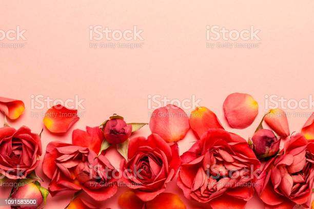 Living coral floral background made of rosebuds and petals.