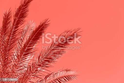 istock Living Coral Palm Tree Color of the Year 2019 Summer Tropical Background 1097136020