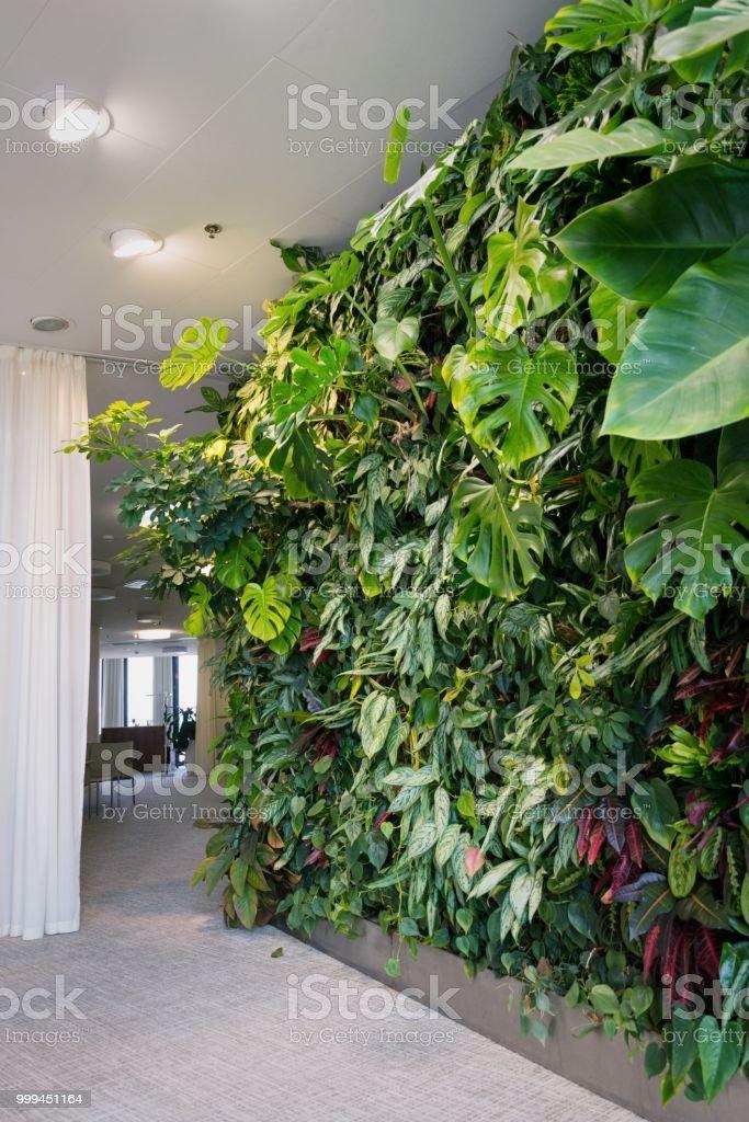 Lebende grüne Wand mit Blumen und Pflanzen, vertikalen Garten im Innenbereich – Foto