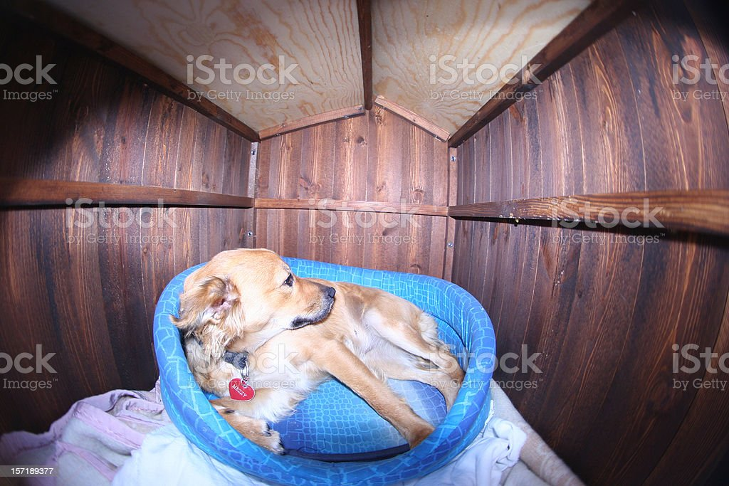 Living in a box royalty-free stock photo