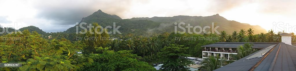 living in the jungle royalty-free stock photo