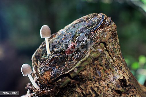Mushroom, frog and caterpilar in the rain forest