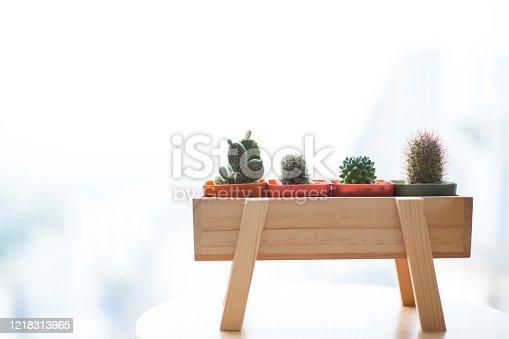 Mini cactus in pot on wood box near winsow