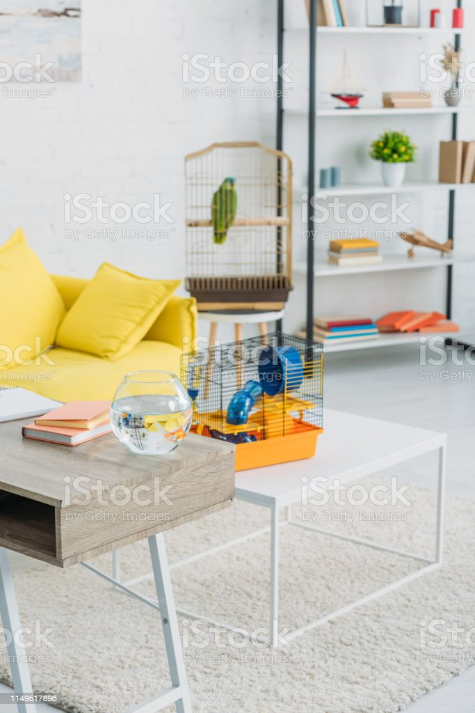 Living Room With Orange Pet Cage On White Table Rack And Green Parrot In Bird Cage Stock Photo Download Image Now Istock
