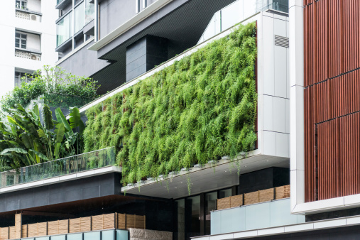 istock Living Wall of Ferns on Modern Building, Sutainable Gardening 499464583