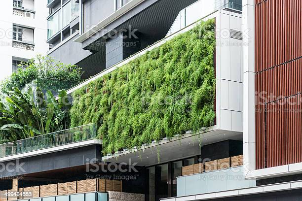 Living wall of ferns on modern building sutainable gardening picture id499464583?b=1&k=6&m=499464583&s=612x612&h=rngi g0g2nyq8strruvc 6hg0672la pkcnze8jv8 w=