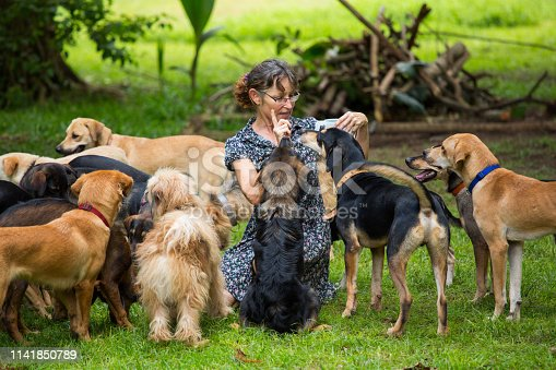woman feeding pack of many adopted stray dogs in tropical garden dog shelter animal welfare rescue theme