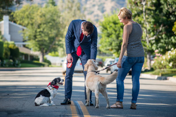 living with pets - businessman and the morning dog routine - vicino foto e immagini stock