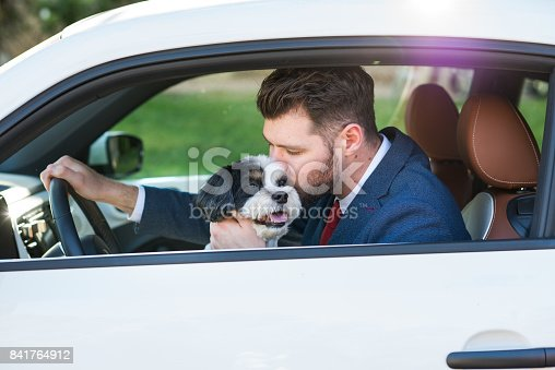 937331052istockphoto Living with Pets - Businessman Driving with His Dog 841764912