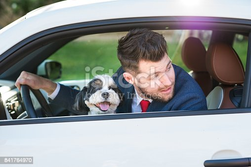 937331052istockphoto Living with Pets - Businessman Driving with His Dog 841764970