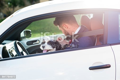 937331052istockphoto Living with Pets - Businessman Driving with His Dog 841764972
