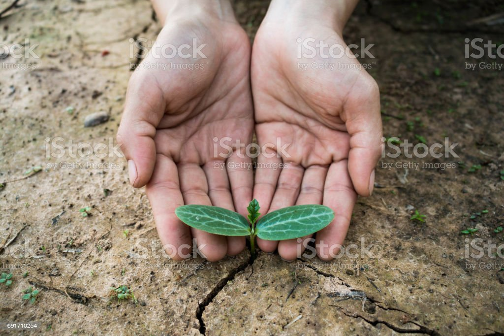 Living with tree drought, Concept reborn tree. stock photo