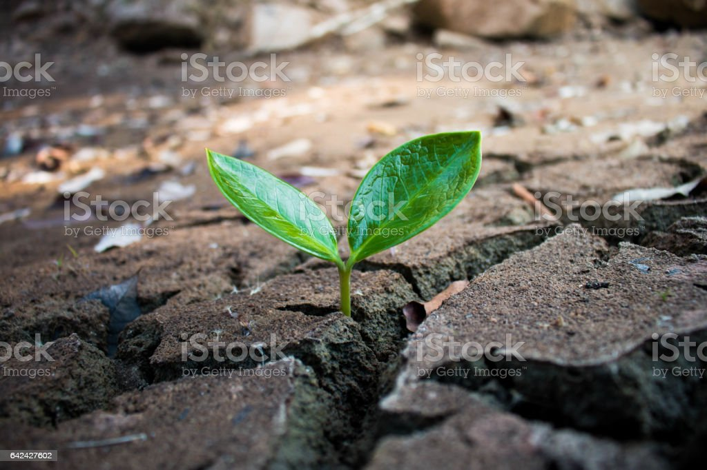 Living with tree drought, Crack ground drought. stock photo