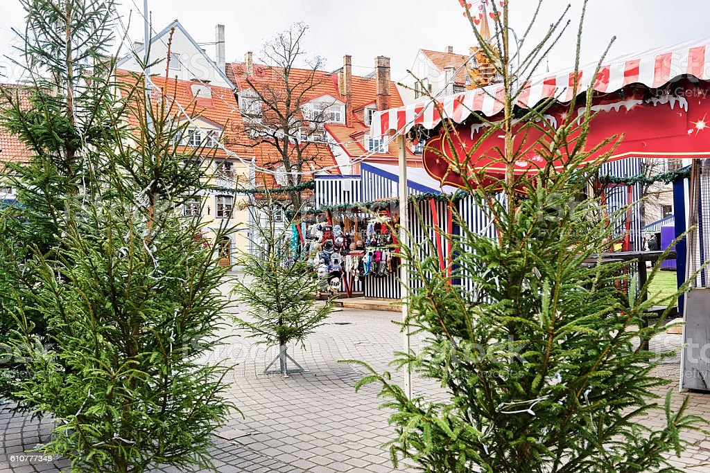Livu square with Christmas trees in old town in Riga stock photo