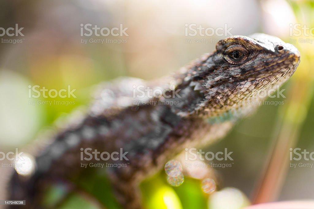 Lizard Close-Up XXL stock photo