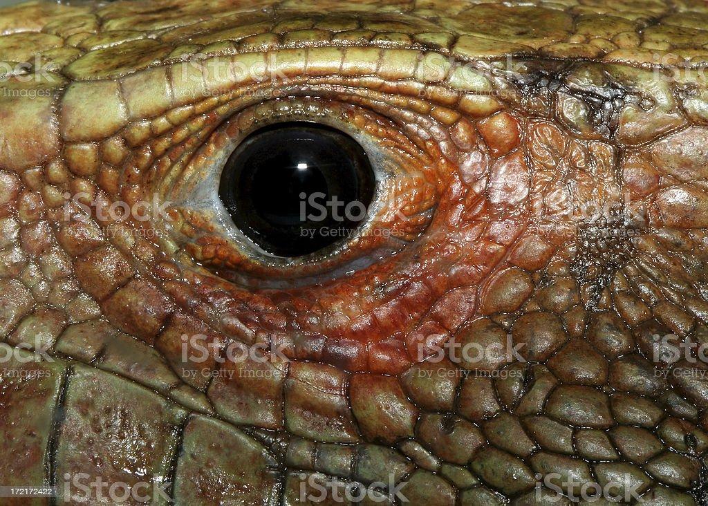 Lizard Eye royalty-free stock photo