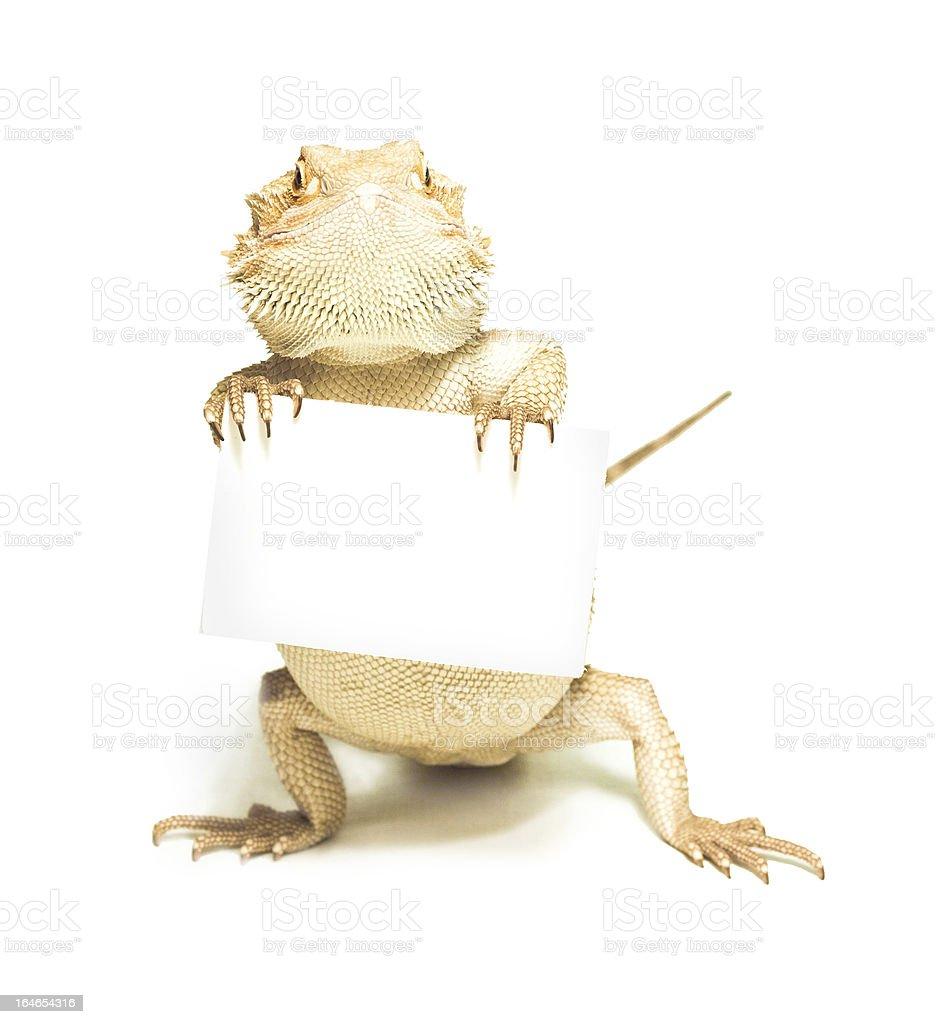 lizard holding Kreditkarte in der hand auf Weiß – Foto