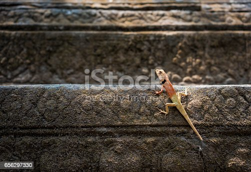 istock A lizard in Beng Mealea Buddhist temple 656297330