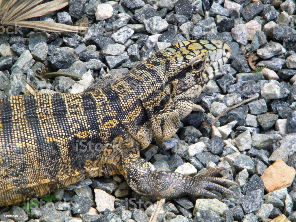 Lizard in the nature - Стоковые фото Без людей роялти-фри