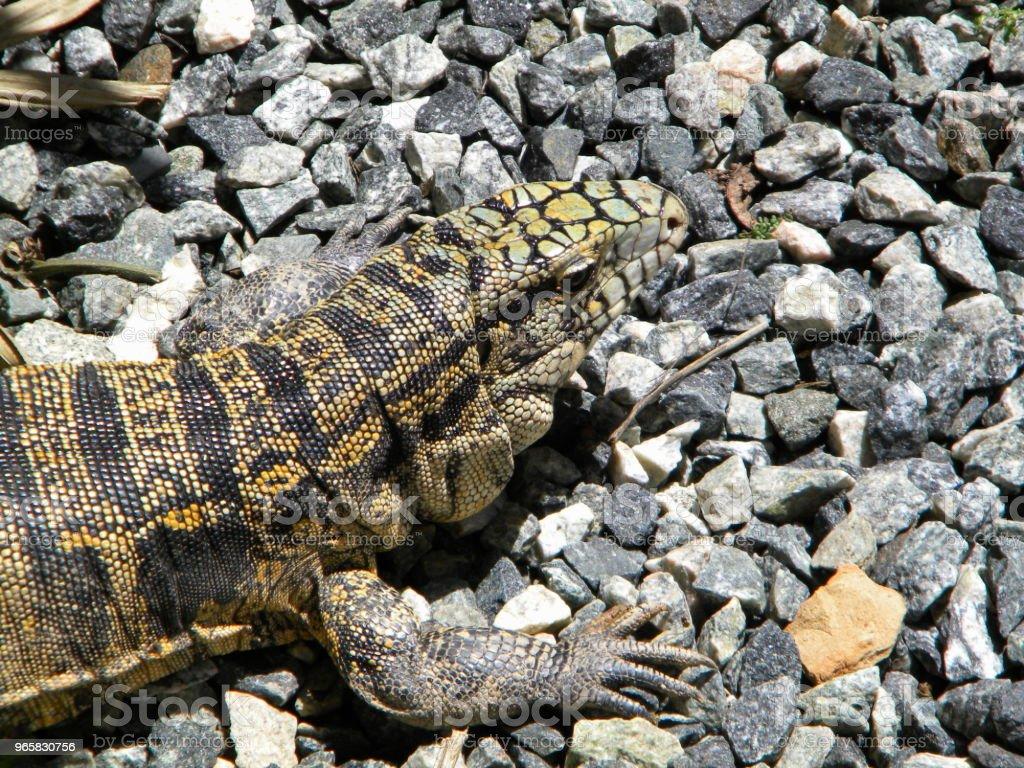 Ящерица в природе - Стоковые фото Без людей роялти-фри