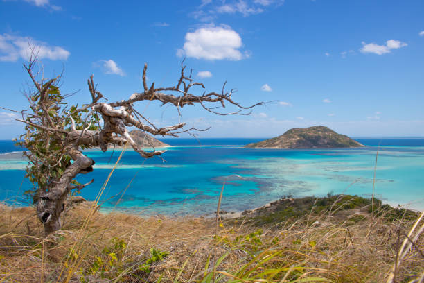 lizard island in north queensland - great barrier reef marine park stock pictures, royalty-free photos & images