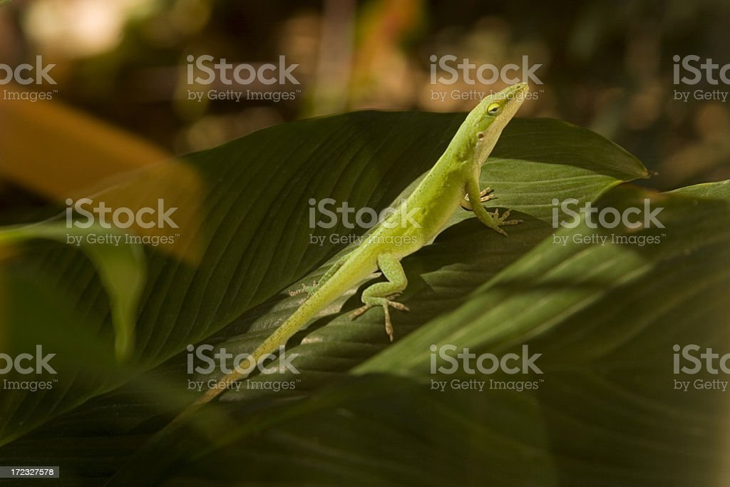 Lizard Lounges stock photo