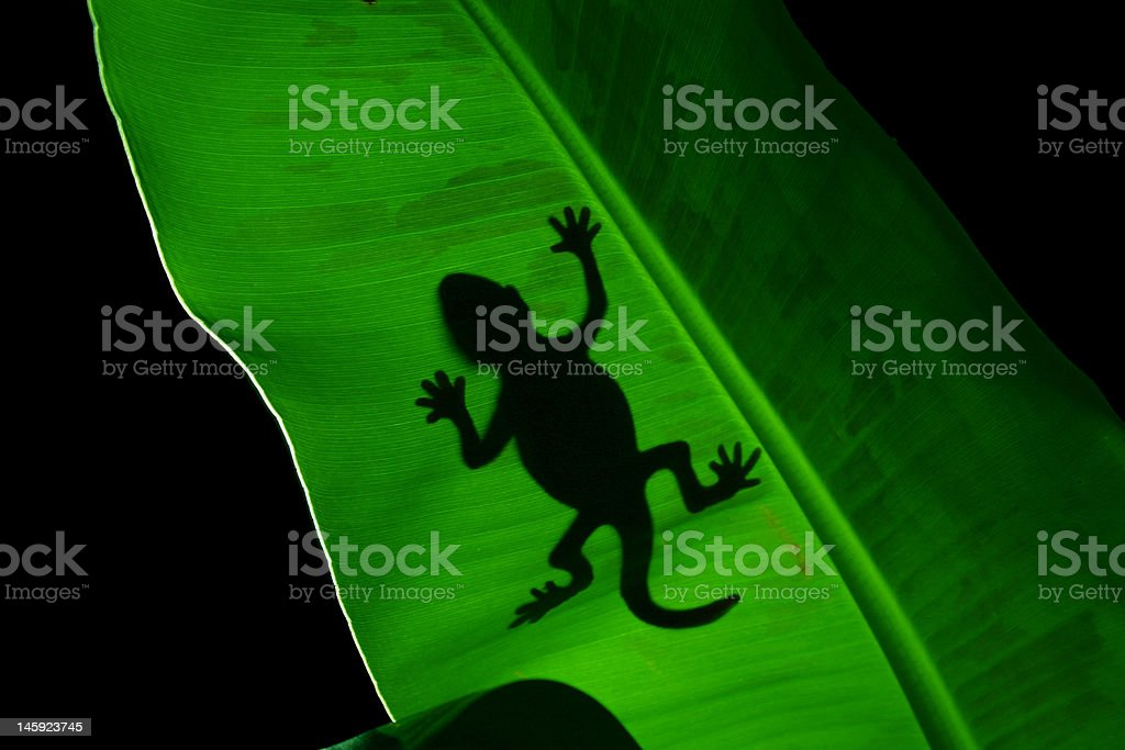 Lizard On A Banana Leaf royalty-free stock photo