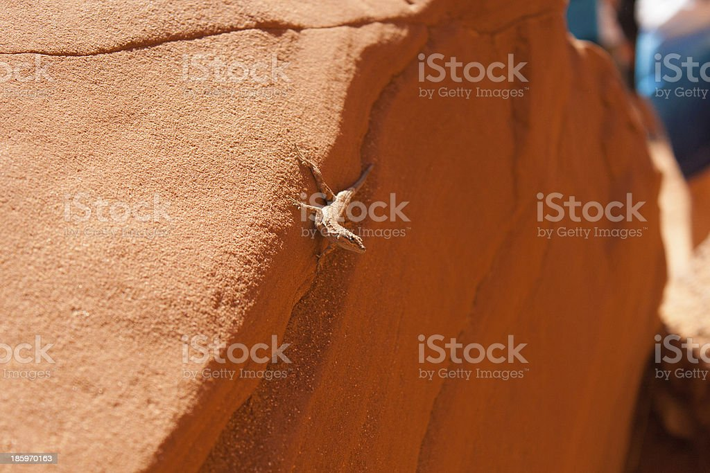Lizard on a red Rock at Antelope Canyon stock photo