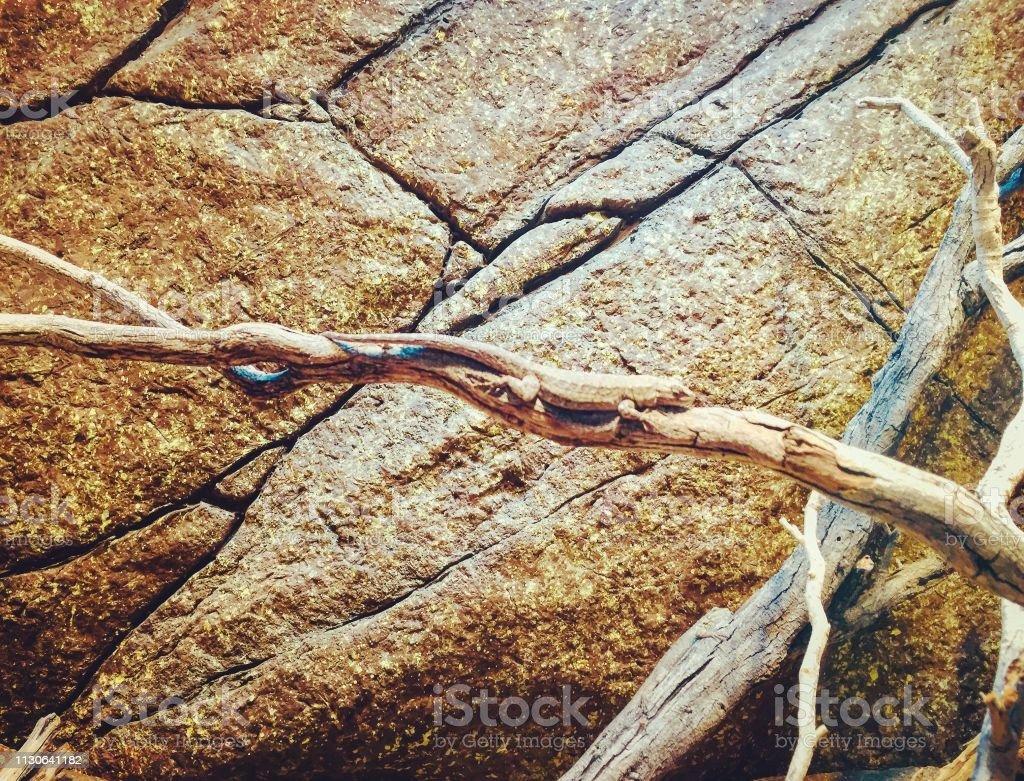 Lizard auf Filiale – Foto