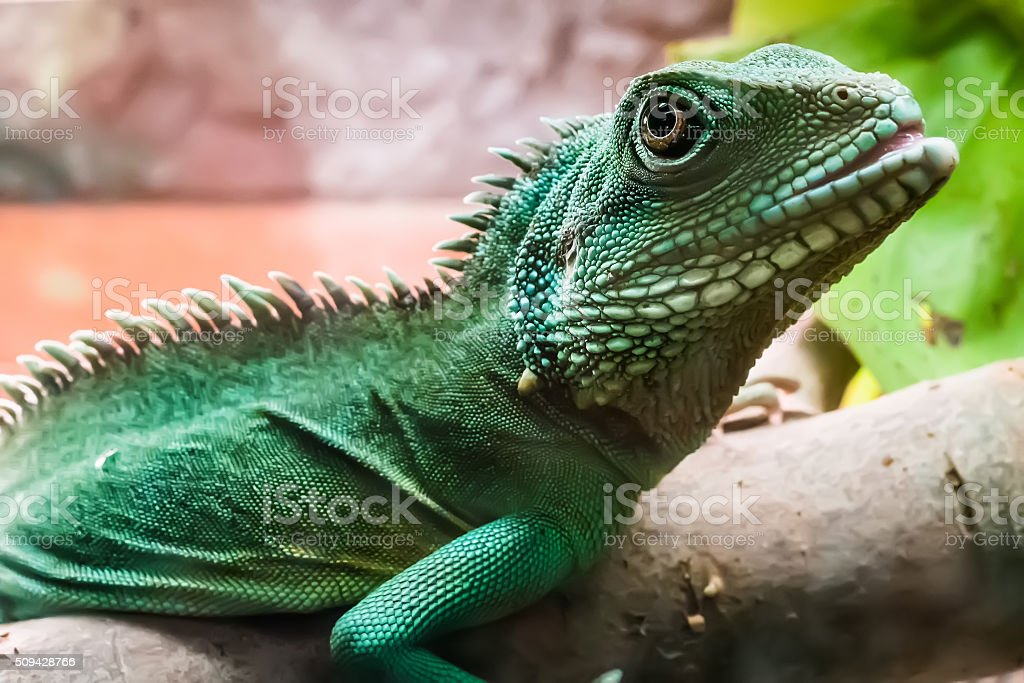 lizard on bruch in terrarium stock photo