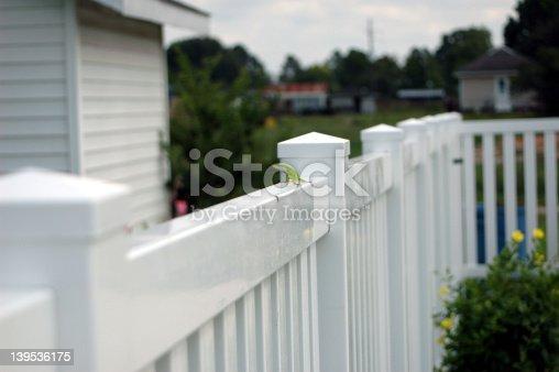lizard on fence
