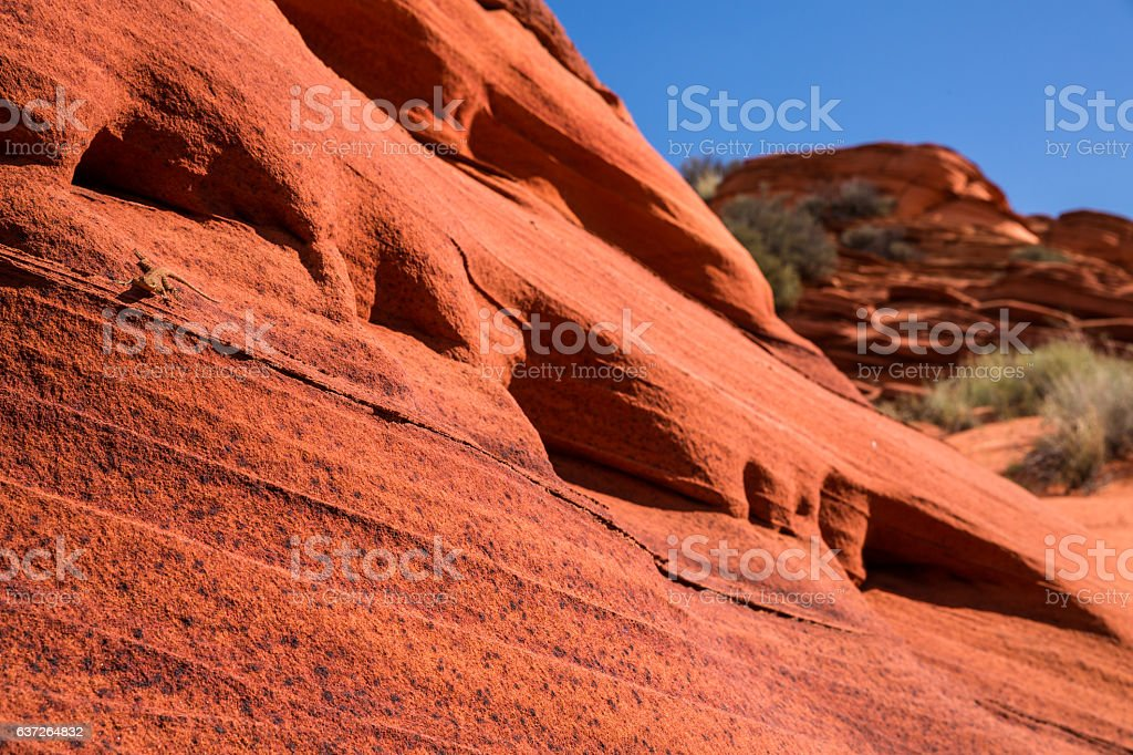 Lizard on steep, featured red sandstone rock face stock photo