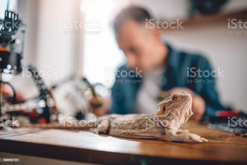Eidechse auf dem Tisch – Foto