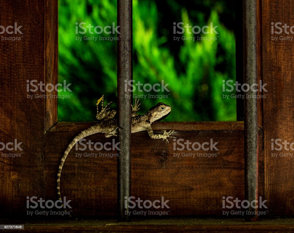 lizard on the window - Royalty-free Abstract Stock Photo