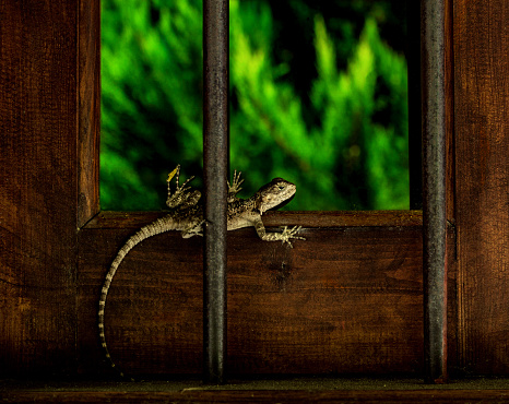 Lizard On The Window Stock Photo - Download Image Now