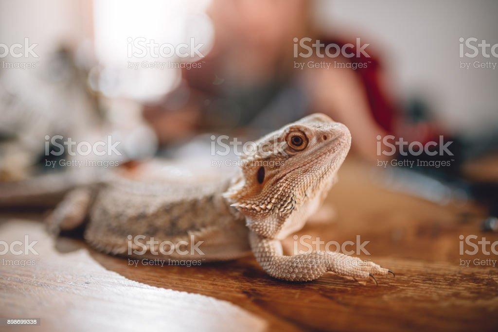 Eidechse auf dem Holztisch – Foto