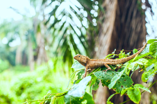 ящерица сидит на зеленом листе stock photo