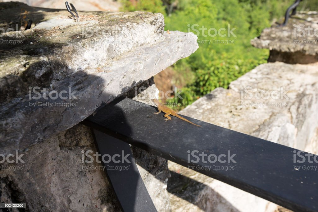 Lizard sitting on black tree stock photo
