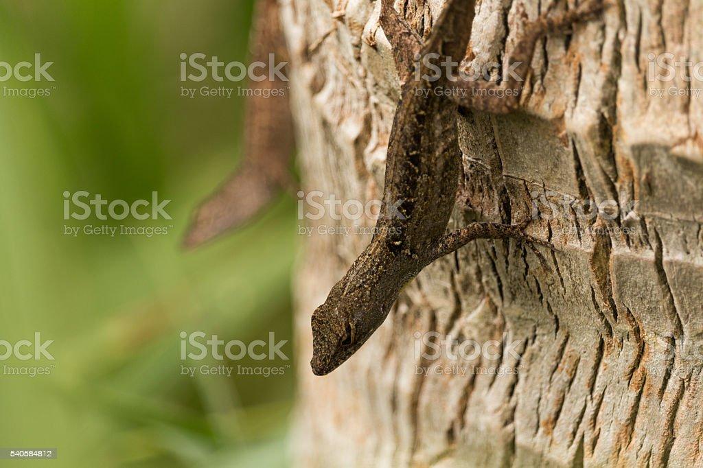 lagartijas stock photo