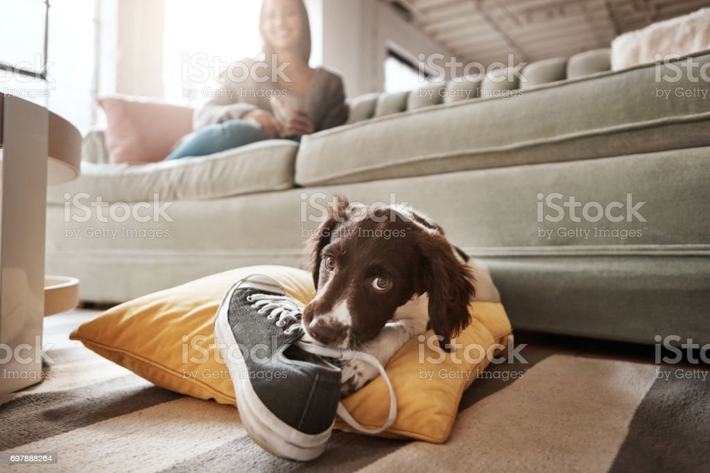 I'll teach her not to put on shoes and leave stock photo