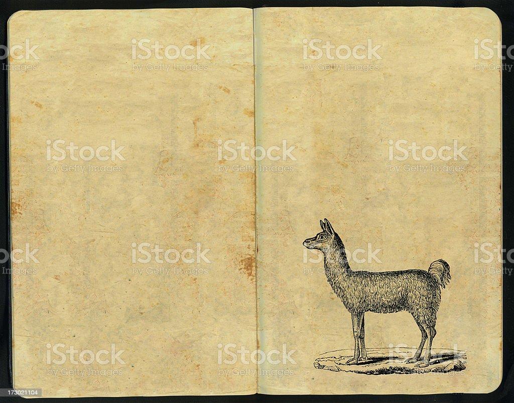 Llama Sketch Pad royalty-free stock photo