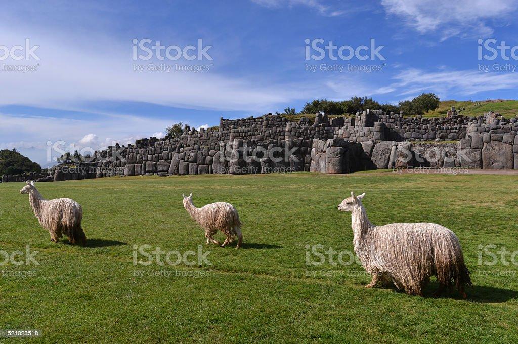Llamas and the stone wall of Inca ruins, Peru stock photo