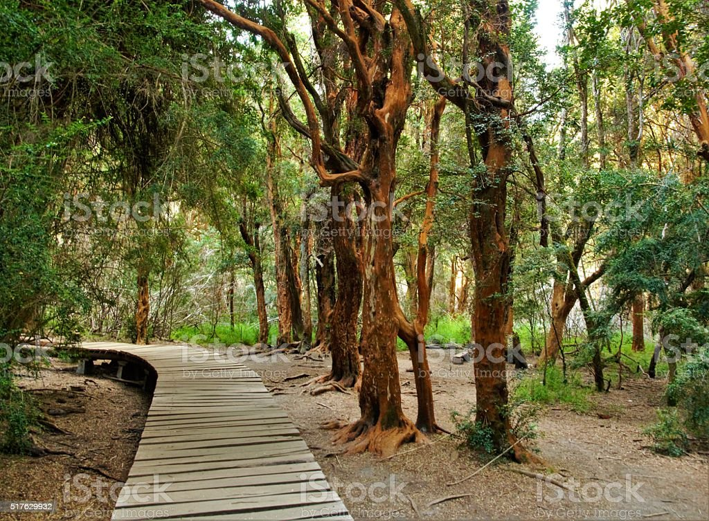 Llao Llao Park stock photo