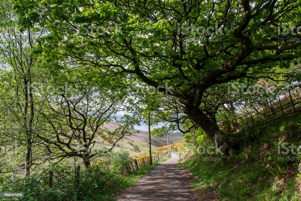 Lliw Valley Reservoir - Public footpath leading to the reservoir. foto stock royalty-free