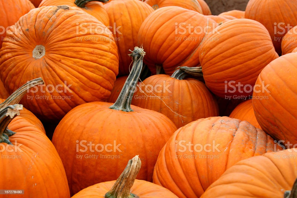 Load of Pumpkins royalty-free stock photo