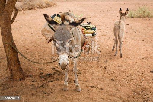 istock Loaded donkey. 173826728