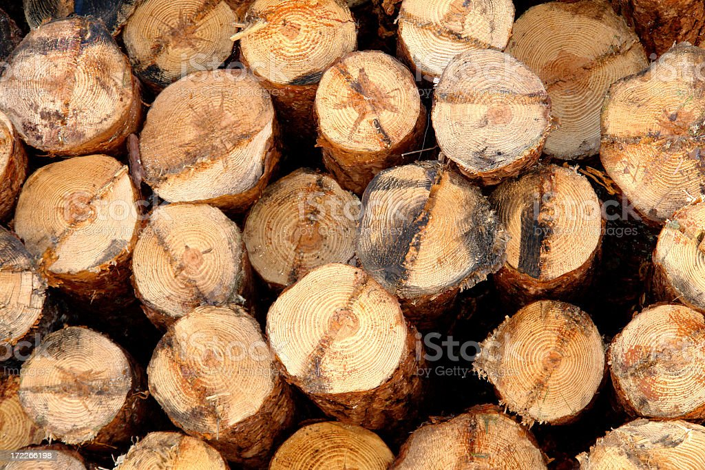 Loaded pine logs royalty-free stock photo