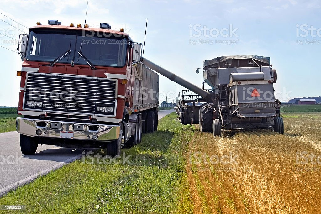 Loading Grain for Transport stock photo
