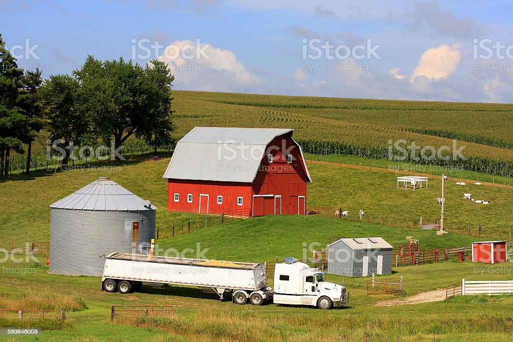 Loading Grain on Iowa Farm stock photo